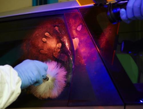 Mit UV-Licht – Die neue Profi-Taschenlampe von Ledlenser macht Unsichtbares sichtbar
